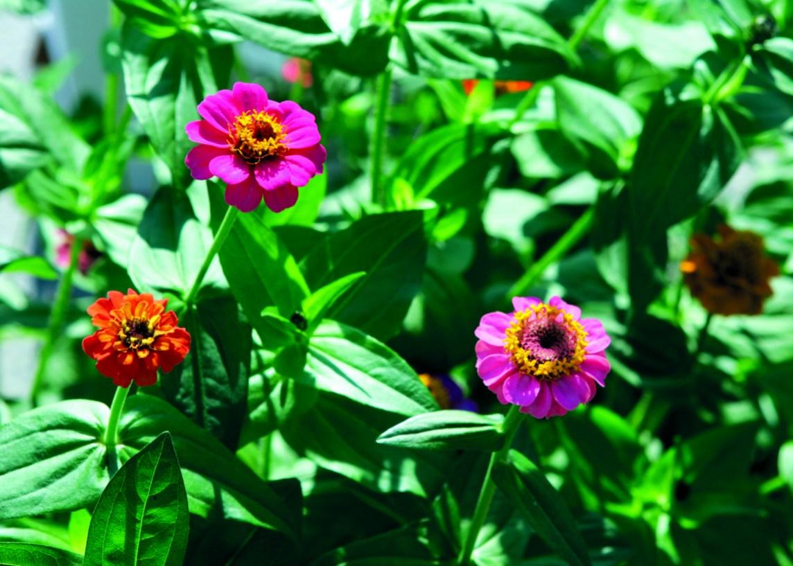 Senter for klimaregulert planteforskning