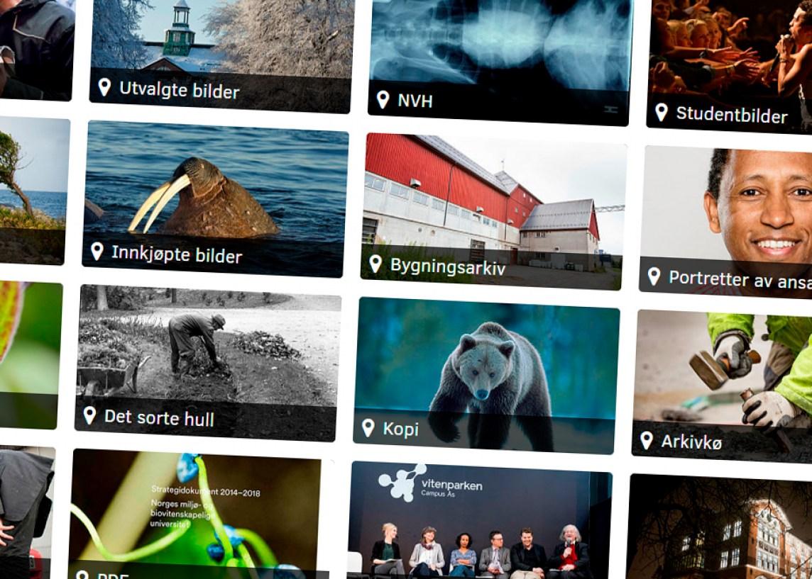 Et utvalg av de arkivene du kan se i NMBUs fotoarkiv