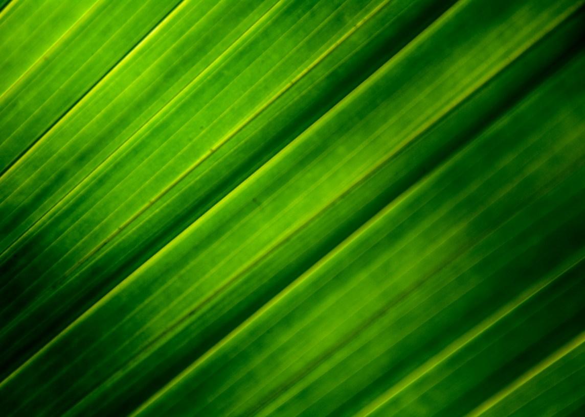 Palmeblader