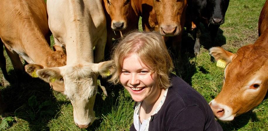 Stipendiat Bente Aspeholen Åby på IHA gjør sin doktorgrad på ulike egenskaper hos ammekyr.