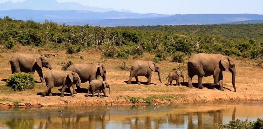 Sør Afrika.