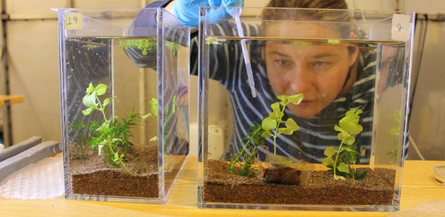 Anna-Lea Golz sampling from the aquariums