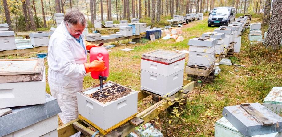 Næringsbirøkter Steinar Bjellås i Aust-Agder dreper biene sine. Også én gang tidligere ble han pålagt å destruere alt av utstyr og drepe husdyrene sine.