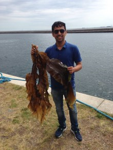 "Sandeep Sharma with the brown algae widely distributed in the North Atlantic, Saccharina latissima (Sweet Kelp)""."